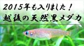 ���㻺������������Τ�����